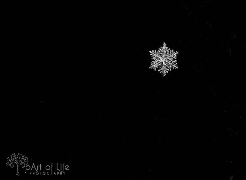 snowflake macro by pArt of Life Photography LLC