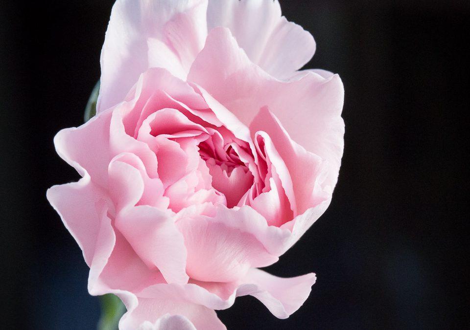 Flowers – February 10 on 10