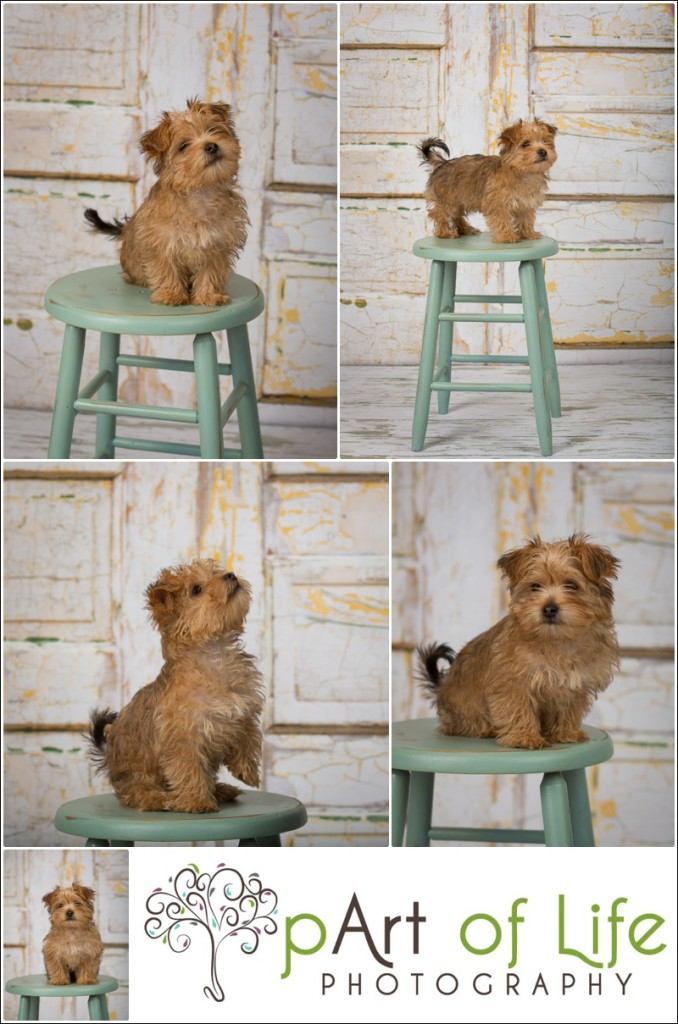 Puppy photo session